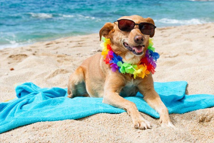 spiagge per cani in toscana 2